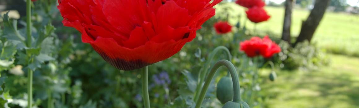 groepsuitje tuinontwerp tuincoach Texel natuur natuurtuin beplantingsplan hovenier