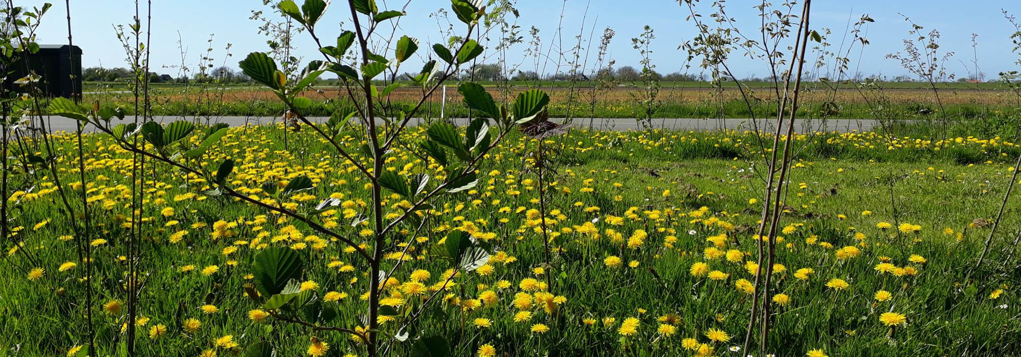 Texel tuin ontwerp natuur tekening rondleiding wandeling tuincoach hovenier
