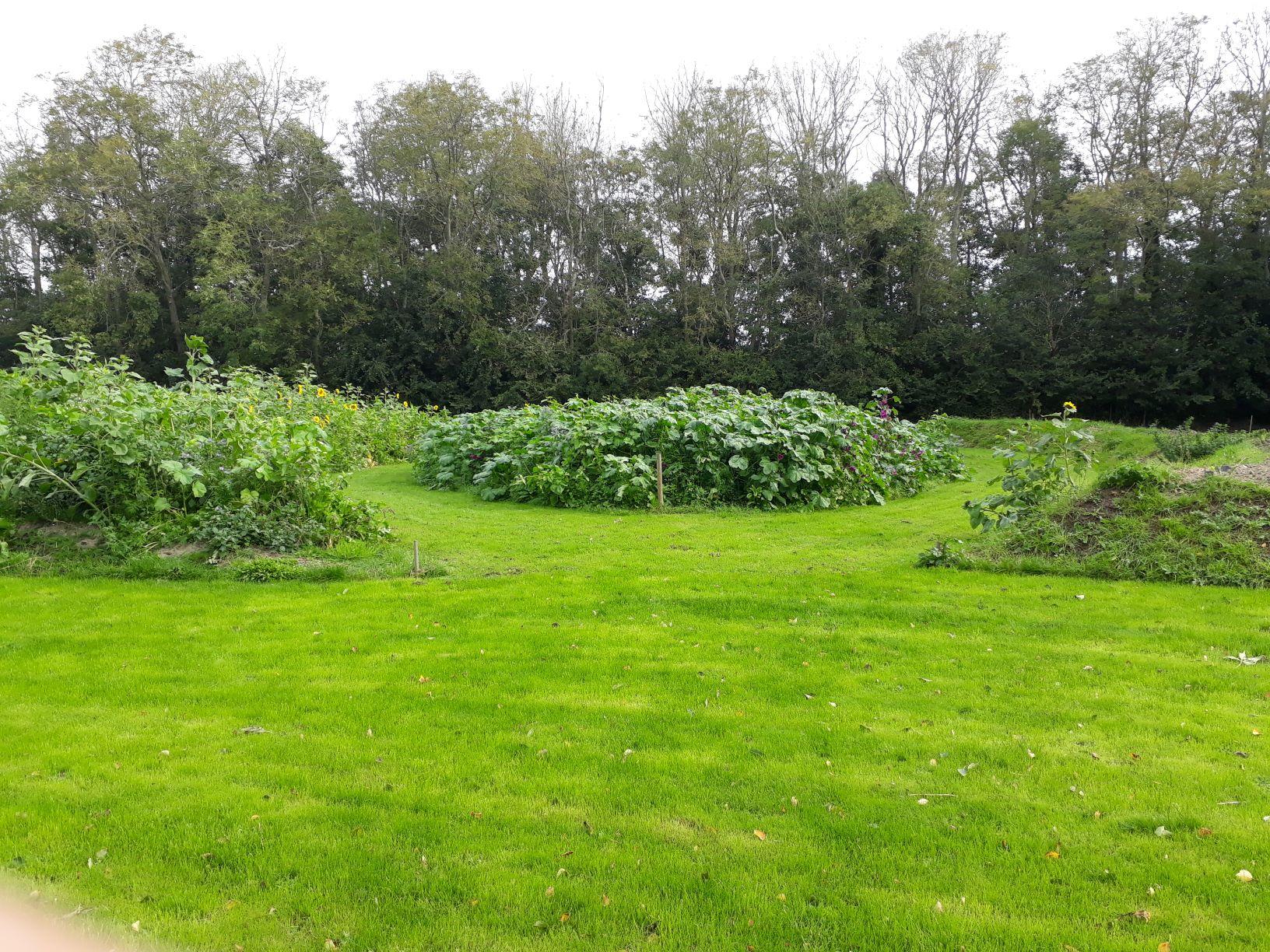 Aanzet tot het voedselbos door grondwerk en groenbemesters
